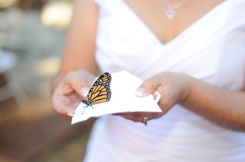 Happy moments_ Живые бабочки (1)